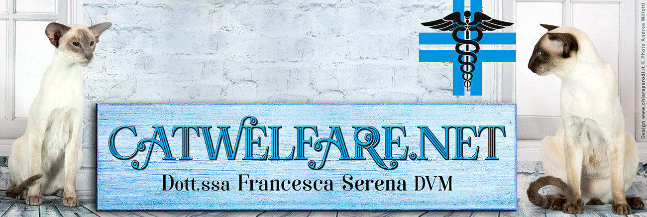 CATWELFARE.NET Dottoressa Francesca Serena DVM medico veterinario comportamentalista